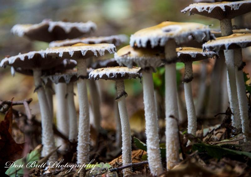mushrooms1 131018-001
